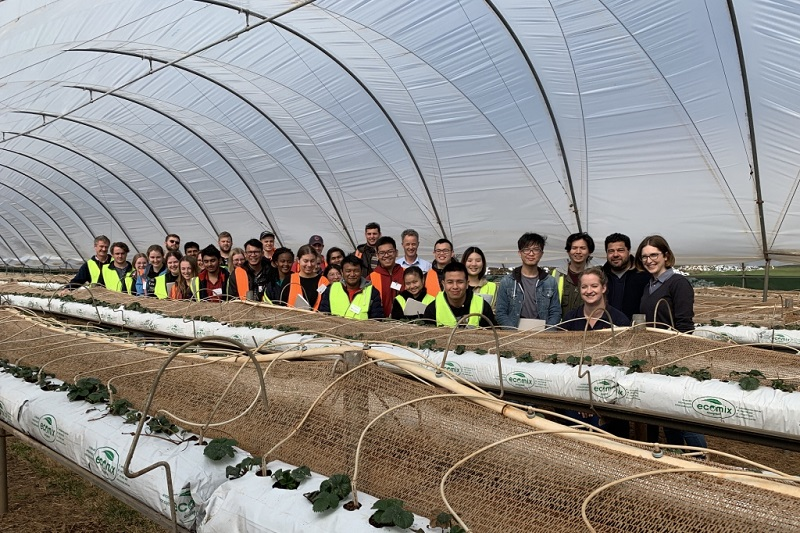 Students in berry tunnel at Costa