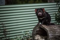 How do you fight wildlife disease on a broad scale?