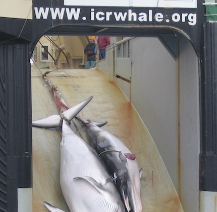 How Philosophy Can Help Break the International Whaling Deadlock