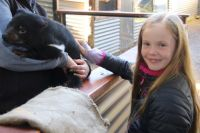 Young passion for Tasmanian devils' plight leads to big results