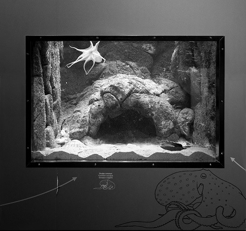 Hörner/Antlfinger  Oceanopolis_Aquarium  Installation, light-boxes, photography, sound  Dimensions variable  2019  Image Courtesy Hörner/Antlfinger