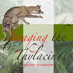 Imaging the Thylacine