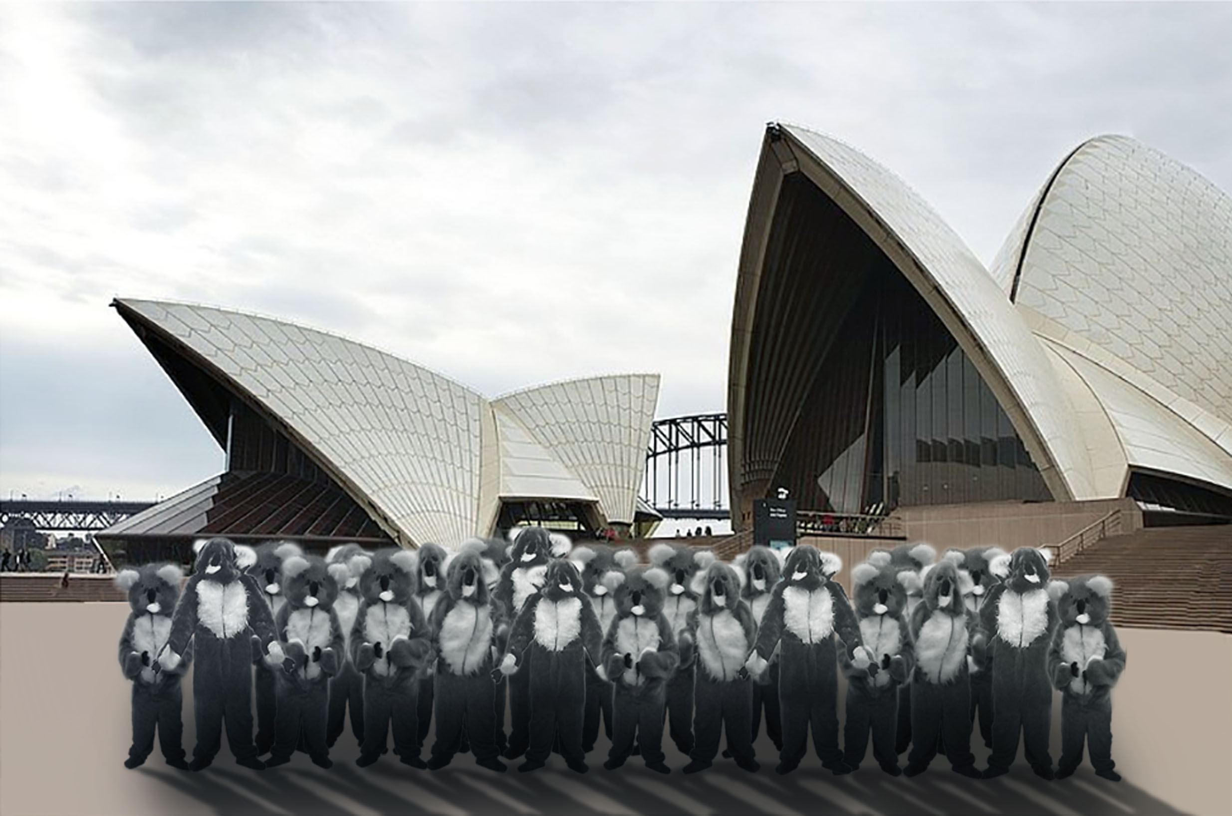 Kathy Temin, Proposal for The Koala Opera, 2014. Courtesy of the artist.