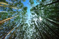 Research funding set to boost timber industry