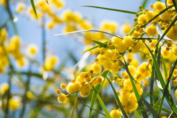 Help pinpoint pollen perpetrators