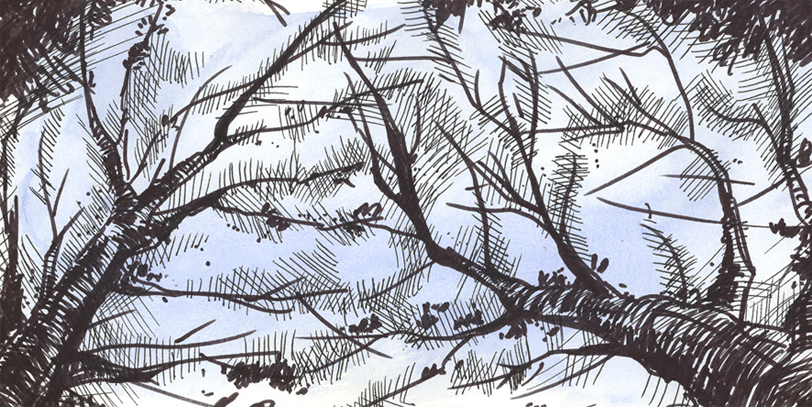 sketch of branches