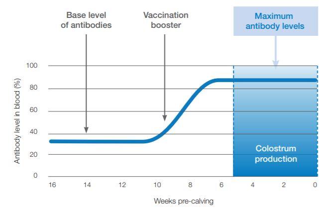 Colostral vaccine