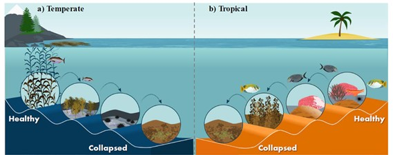 Temperate and tropical comparison of degrading reefs from healthy to collapsed states