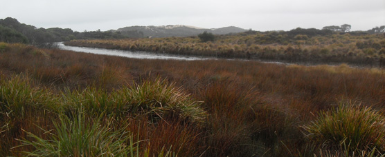 Swamp - North-East Tasmania