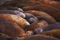 Picture This: Life's a beach for sleeping seals
