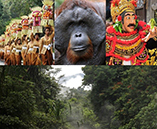 Indonesia Field Trip: Bali & Sumatra Environmental & Cultural Conservation