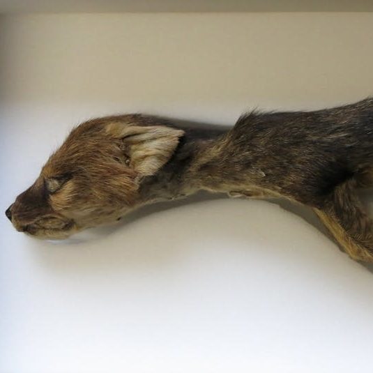 On the trail of the London thylacines